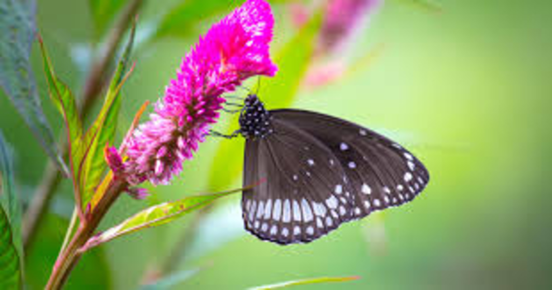 Hidden Butterfly Parks in Maharashtra. image