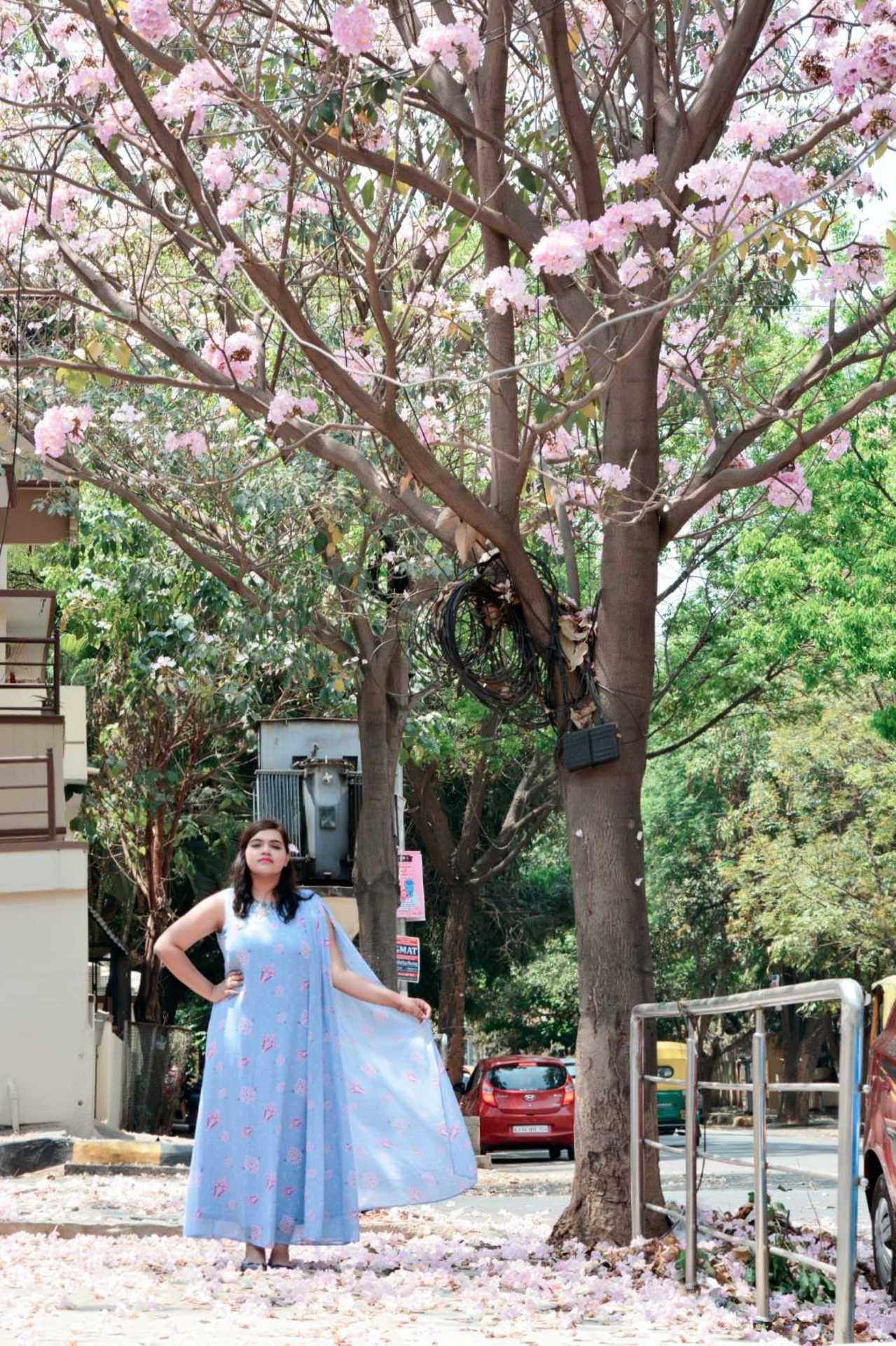 Cherry Blossom Spring image