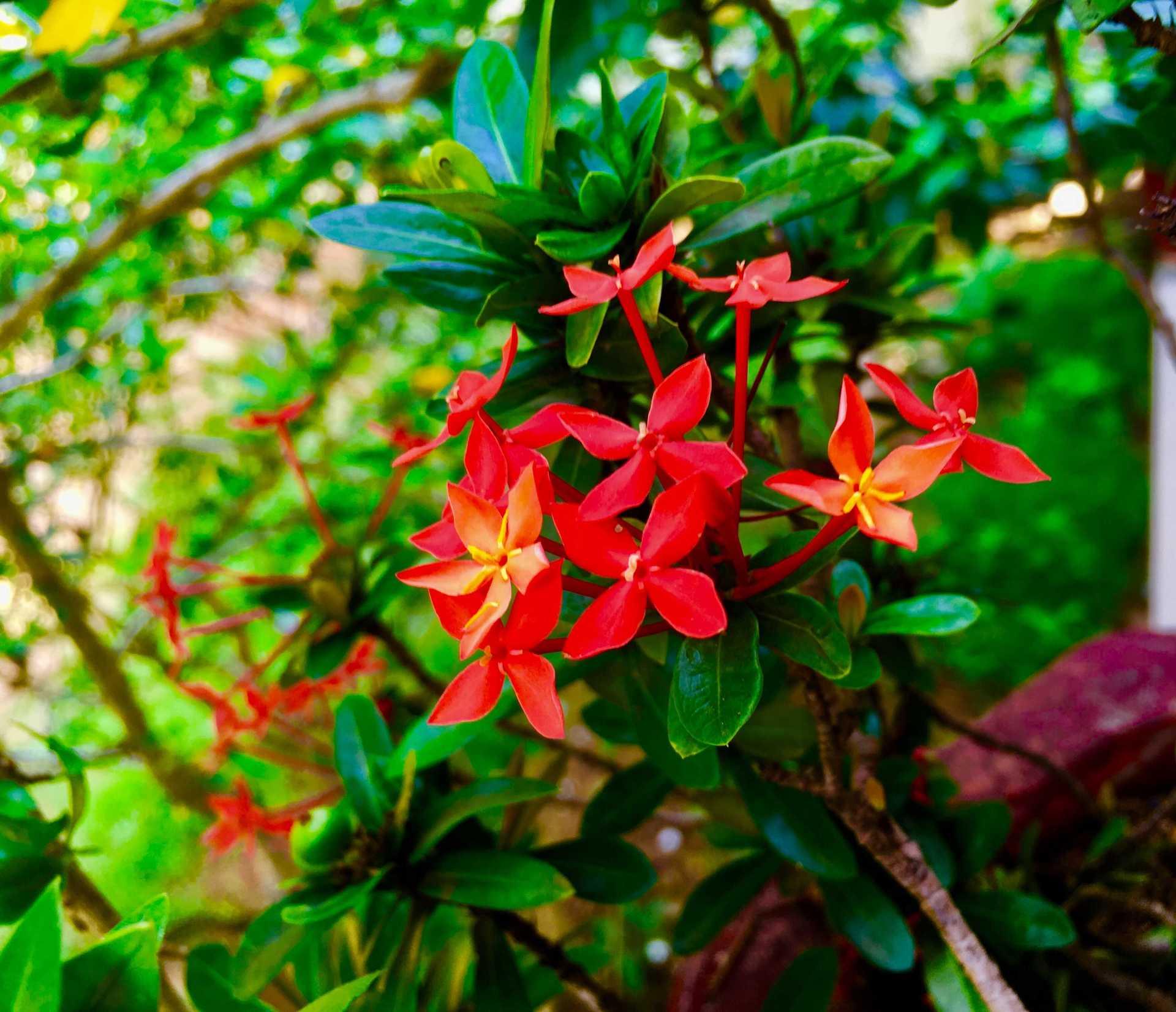 Pooja SreesaKumar - IMG_E7844