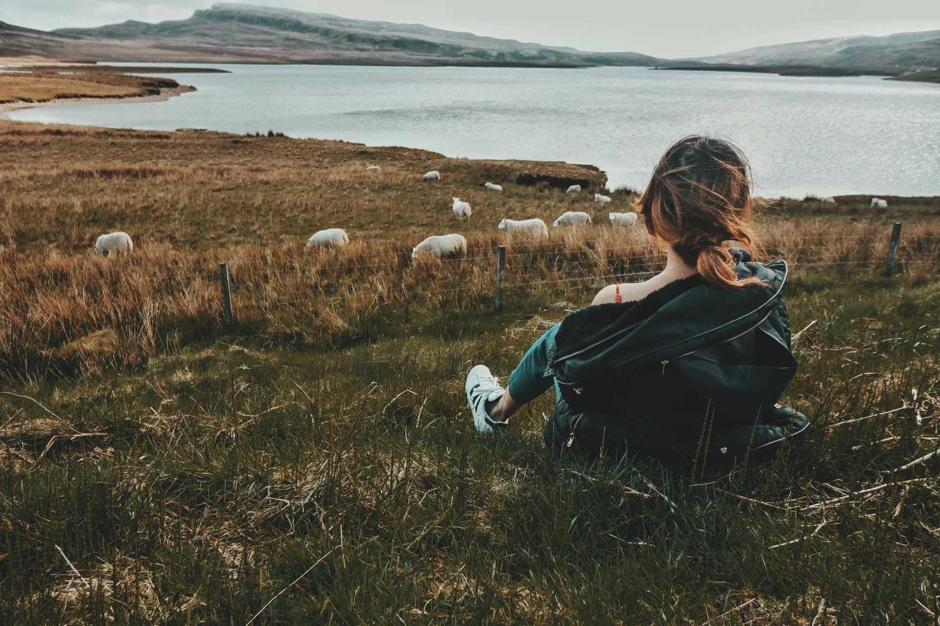 The Beautitude - sheep