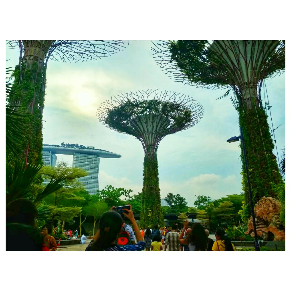 the january chic-MAGICAL SUMMERS AT SINGAPORE !!!